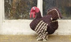 Knit your own turkey