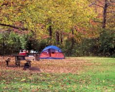 Falling leaves, Kyles Landing Campground, Buffalo National River