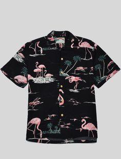Elegant universe Paradise Found Flamingo