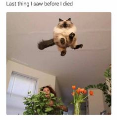 Honestly I want this to be the last thing I see before I die - #funny #lol #viralvids #funnypics #EarthPorn more at: http://www.smellifish.com