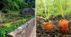 Qué hortalizas se pueden cultivar los 365 días del año