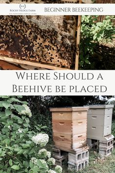 Backyard beekeeping for beginners. An essential part of keeping bees is knowing the best spot for hive placement. Learn where beehive should be placed and what direction they should face for the healthiest bee colony. Honey Bee Hives, Honey Bees, Honey Bee Garden, Honey Bee Farming, Beekeeping For Beginners, Raising Bees, Backyard Beekeeping, Birds And The Bees, Bee Friendly