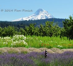 Exploring outside Portland: Columbia River Gorge, lavender farm on the Fruit Loop, and Cannon Beach | Digging