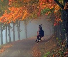 The Noble Warrior of the Animal Kingdom  In awe of these gallant creatures: How many samurai, soldiers and knights have they served through the centuries? Love the mystical autumn trees in this piccie, too.