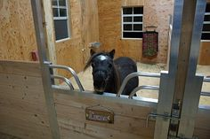 These cute mini horses are enjoying their perfect mini sized gossip topped sliding stall doors.