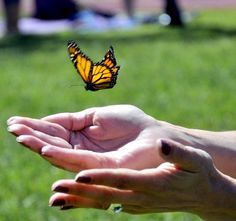 """""""Celebration of Life, Live Butterfly Release"""" by Oscar Pedraza, Nathan Adelson Hospice, Las Vegas, NV Your Smile, Make Me Smile, Affordable Dental Implants, Las Vegas, Teeth In A Day, Funeral Homes, Memorial Ideas, Service Ideas"""