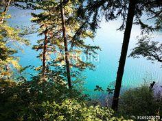 Kiefernwald am Ufer des Alpsee mit türkisblauem Wasser und Rundwanderweg in Schwangau bei Füssen im Freistaat Bayern