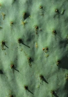 Love the way the cactus looks like skin. Nature. Copyright
