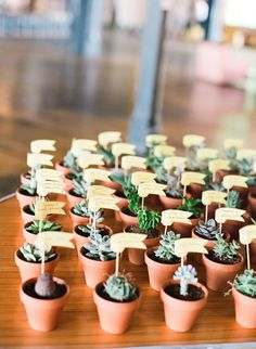 great idea for escort card -- personal potted succulents with name flags