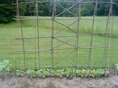 A gardener in Maine submitted this great idea using our colorful twine gift pack to create a one of a kind natural trellis for her beans. Repurpose fallen branches and string colorful garden twine for beans or peas to climb!
