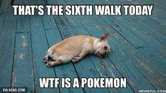 Pokemon memes Gotta Catch 'Em All #Pokemongo #9gag @9gagmobile