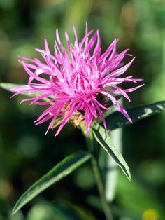 Learn about the various types of perennial wildflowers and how to successfully grow them with this gardening guide from HGTV.