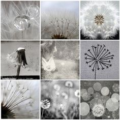 Structure and shape of a dandelion reminds me of the chimney sweep brooms from Mary Poppins and umbrellas-another image that runs through the book.