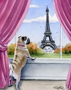 152 Best Pets in Paris images | Pets, Paris, Paris ...