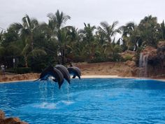 Lord Parque dolphin show