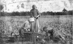 In dezelfde tijd dat Van Gogh in Nuenen schilderde, fotografeerde Victor de Buck het aardappelrooien in de Brabantse Kempen.