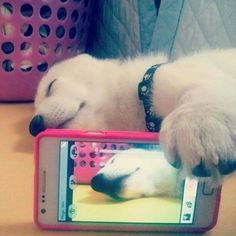 Funny Animal Selfies Will Put A Smile On Your Face  #cute #pets #photos #selfie Opposable thumbs once gave us humans a lofty edge over our animal friends. You'll no doubt understand how we felt a little piece of ourselves die fore...