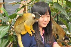 Amazing close up encounter with Squirrel Monkeys at Melbourne Zoo!  http://www.zoo.org.au/melbourne/wild-encounters/close-up-encounters