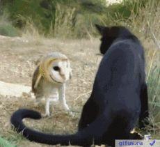 gifus.ru — «gif, гифки, гиф, gif анимация, животные, жестокость, Драки, Бокс, Коты, Совы, гифус» на Яндекс.Фотках