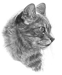 Vintage Cat Card - B Sketch