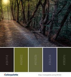 Color Palette Ideas from Woodland Forest Tree Image Colour Schemes, Color Combos, Couleur Hexadecimal, Color Mixing Chart, Forest Color, Paint Color Palettes, Tree Images, Pallet Painting, Find Color