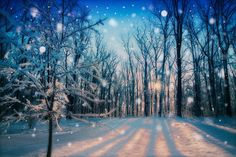 Forest in snow falling snow nature photography by nataliemikaels, $25.00 @Natalie Jost Mikaels