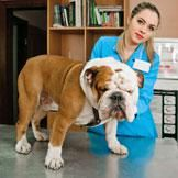 Does Your Pet Have Allergies to Some Drugs? Dog Illnesses, Love Pet, New Puppy, Dog Photos, Allergies, Adoption, Puppies, Pets, Health
