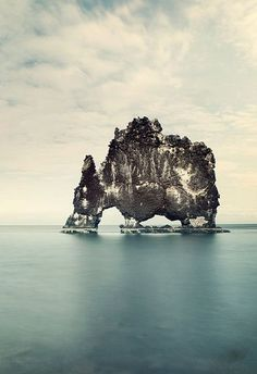 The Elephant in the Water Photography Art Print