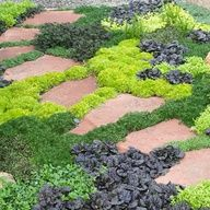 Evergreen ground covers and hardscape pathways.