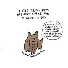 I'm not clinically depressed. I'm a bat! Cute Bat, Creatures Of The Night, Little Brown, Animal Facts, Kawaii, Bad News, Illustrations, Funny Cute, Make Me Smile