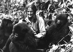 NOTABLE COLD CASES <=> Dian Fossey plays with a group of young mountain gorillas in Rwanda's Virunga Mountains in central Africa. She is one of a group of Anthropologists who study animals such as the gorilla. (AP PHOTO) 10/05/1982