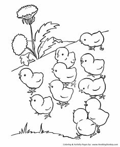 farm animal coloring page free printable chicken coloring pages featuring baby chicks out for a walk coloring page sheets