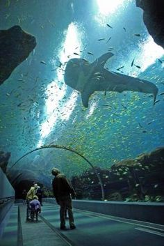 Georgia Aquarium - Always remember to keep your chin up - you never know what kind of wonders await :) Travel Usa, Travel Tips, Atlanta Attractions, Choses Amusantes, Oh The Places You'll Go, Places To Visit, Georgia Aquarium, Sea Aquarium, Wale