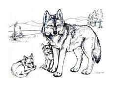 82 meilleures images du tableau Dessins de Loups à ...
