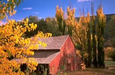 Autumn leaves and the old red barn at historic Coe Ranch at Hondo, just outside of Ruidoso, New Mexico