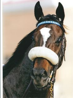 Zenyatta. I have this picture framed from a friend. It still amazes me.