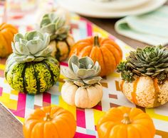Here's an adorable idea. Make a DIY mini pumpkin vase for your Thanksgiving table this year. Scoop out the center and place a succulent or mini fern in.