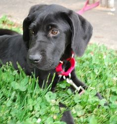 Available throguh Lucky Labs in Charlotte, nC.