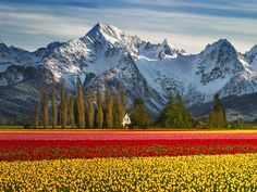Skagit County's Finest by Lou Nicksic on 500px Beautiful World, Beautiful Places, Natur Wallpaper, Landscape Photography, Nature Photography, Photography Flowers, Amazing Photography, Places To Travel, Places To Visit