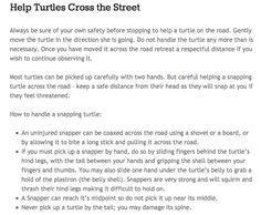 Help turtles cross the street. Be a super hero! Kawartha Turtle Trauma Centre  http://kawarthaturtle.org/blog/get-involved/roads/