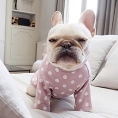 Outfit this weekend PJS Korean Beauty, Pjs, French Bulldog, Skin Care, Animals, Instagram, Memes, Outfit, Outfits