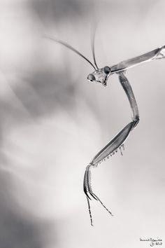 Dark Mantis by Bruno Toujas on 500px