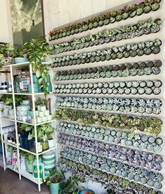 7 Top Ideas For Your Vertical Vegetable Garden Succulent Wall, Succulent Gardening, Cacti And Succulents, Planting Succulents, Planting Flowers, Organic Gardening, Propagating Succulents, Succulent Display, Succulent Planters