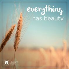 Embrace the beauty in people and that beauty will be reflected in you. Everything has beauty. #inspiration #quote #motivation #spreadhope