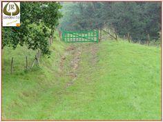Corzo recechado en 2010 en tierras vascas.