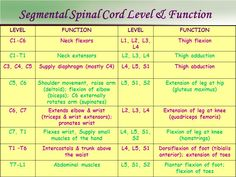 Spinal Cord Injury Levels And Function Chart Google