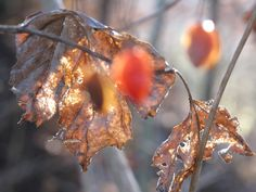 autumn, fall, herbst Autumn Fall, Fruit, Pictures, The Fruit