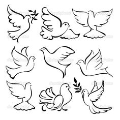 Dove Drawing Outline Kb jpeg dove sketches