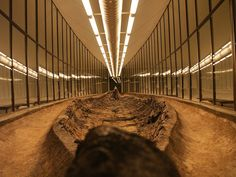 Ladby viking burial ship, contains skeletal remains