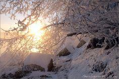 Фотография Winter автор Elena Petrova на 500px